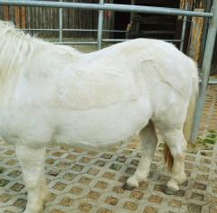 EMS Pony
