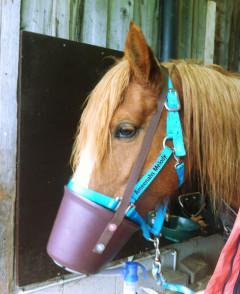 COPD - Bronchitis beim Pferd